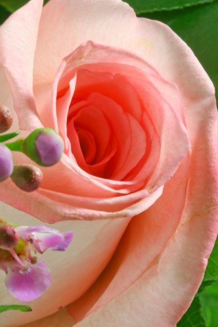 Valentine's flowers-019