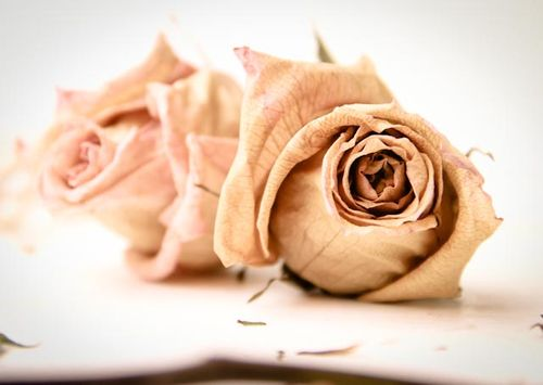 Valentines flowers-107