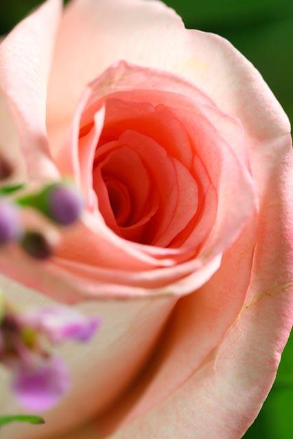 Valentine's flowers-017